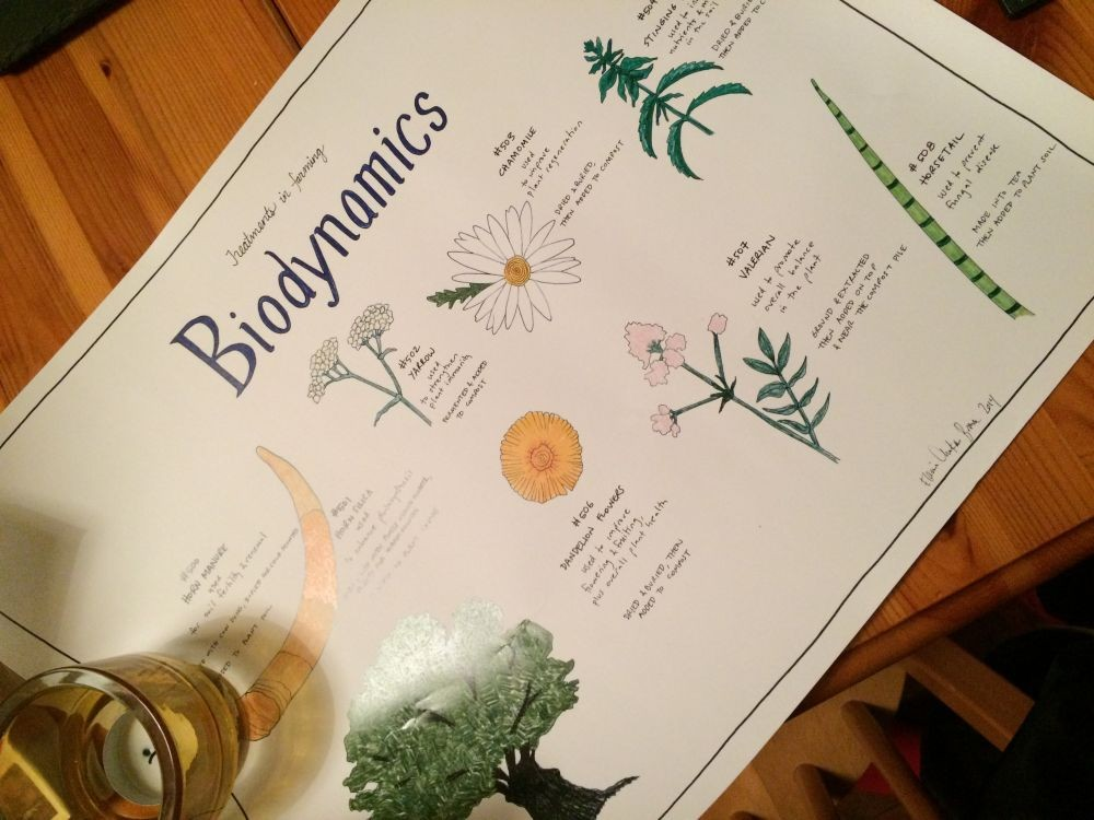 Biodynamics illustration by Elaine Chuckan Brown